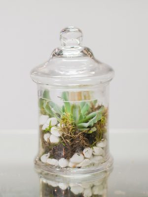 Beautiful-Terrarium