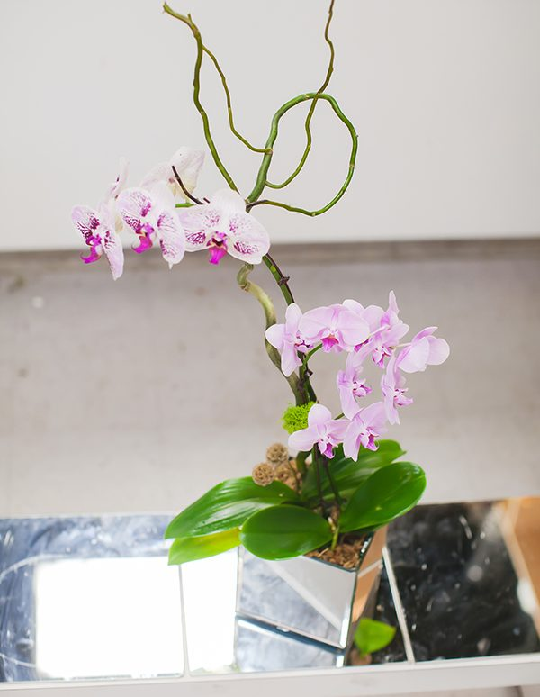 Light-Pink-Orchid