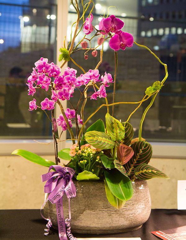 Luxe-Potted-Orchid
