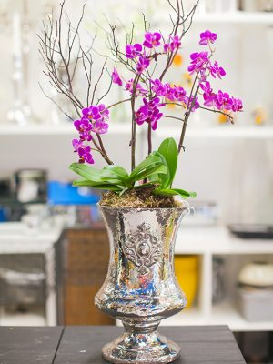 Potted-Orchid