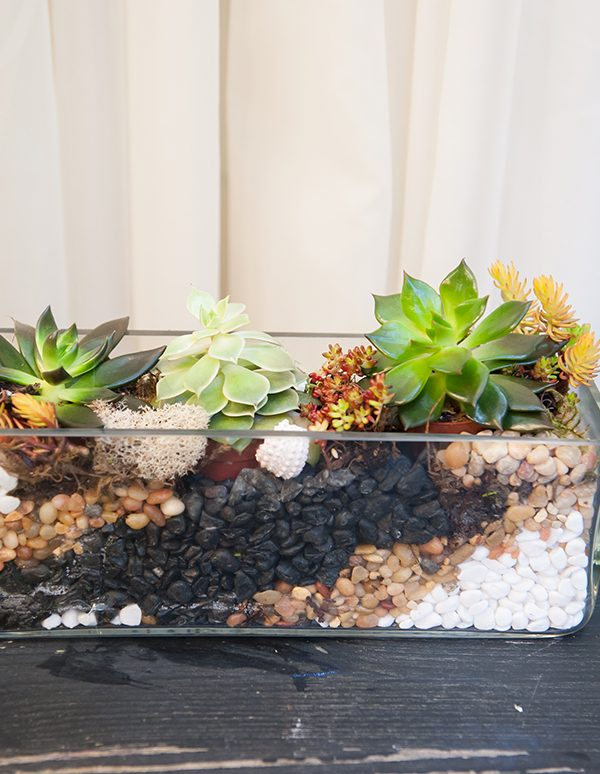 Potted-Terrarium