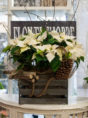 White-Poinsettia